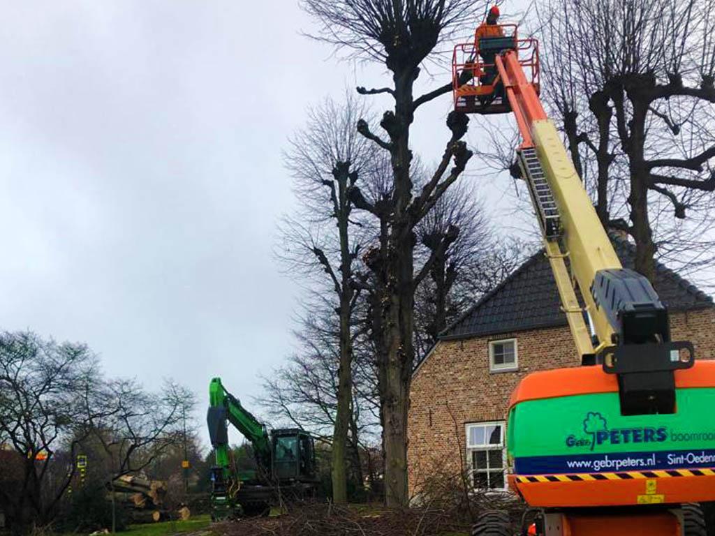 Bomen rooien Hoogwerker Sint-Oedenrode